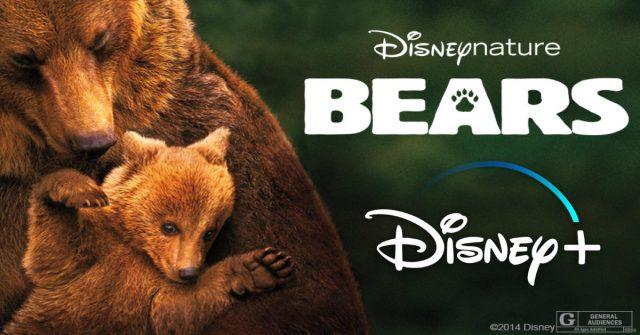 disney plus, bears